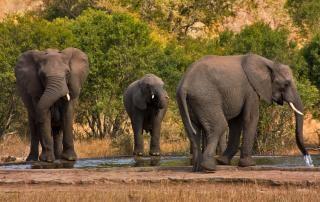 Kruger park olifanten reizen Gratis Foto