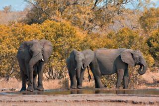 Kruger park olifanten zwart Gratis Foto
