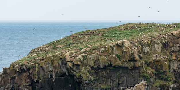 Kudde atlantische papegaaiduikervogels bij kust, little catalina, north bird island, bonavista peninsula, ne Premium Foto