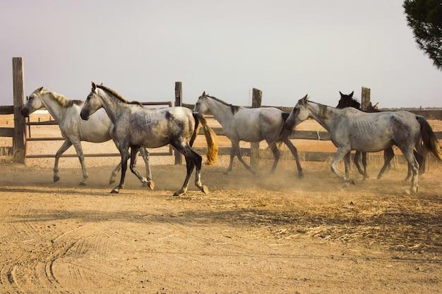 Kudde paarden Gratis Foto