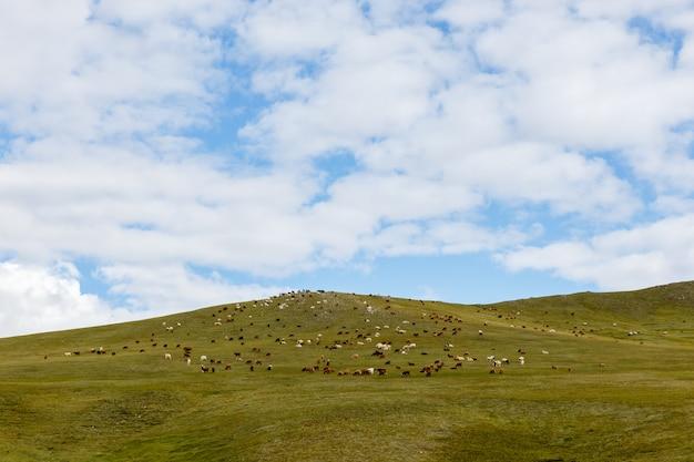 Kudde schapen en geiten grazen in de mongoolse steppe Premium Foto