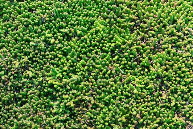 Kunstgras groene grasvloer Premium Foto