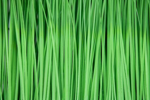 Kunstmatig groen gras als textuur en achtergrond. Premium Foto