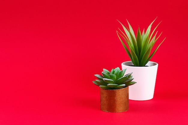 Kunstmatige groene succulent in een gouden pot van toilethoes op een rode bordeauxrode achtergrond, Premium Foto