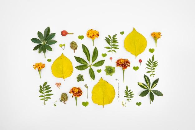 Kwadraat bloemen collectie Gratis Foto