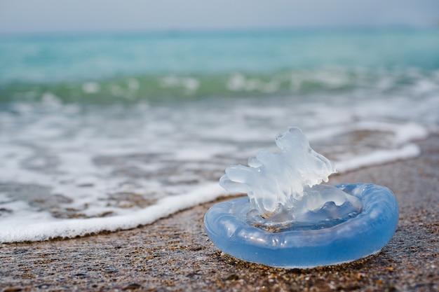 Kwallen aan zee Premium Foto