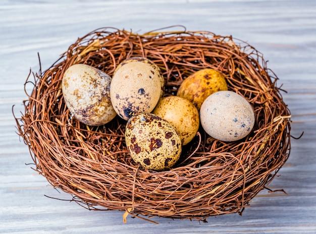 Kwarteleitjes in het nest Premium Foto