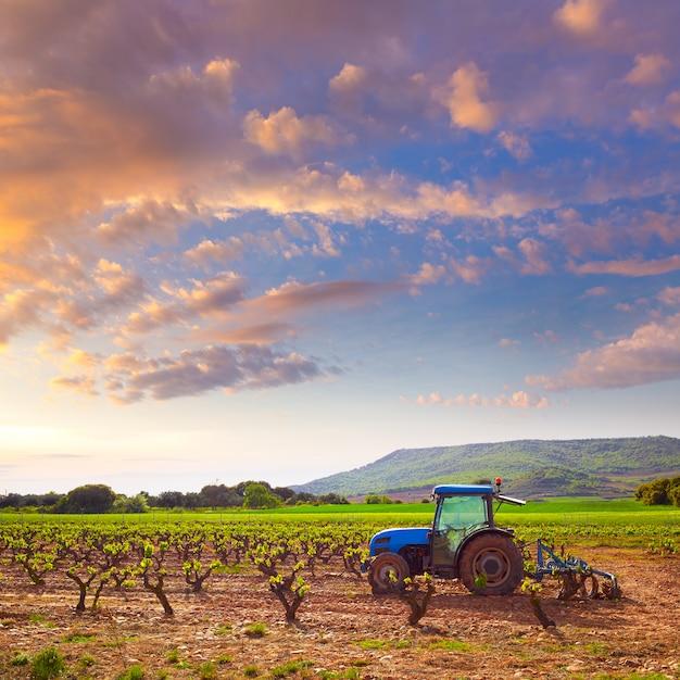 La rioja-wijngaard op de weg van saint james Premium Foto