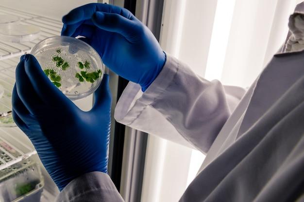 Laboratoriumarbeider die een groene substantie op een petrischaal onderzoeken terwijl het uitvoeren van coronavirusonderzoek Gratis Foto
