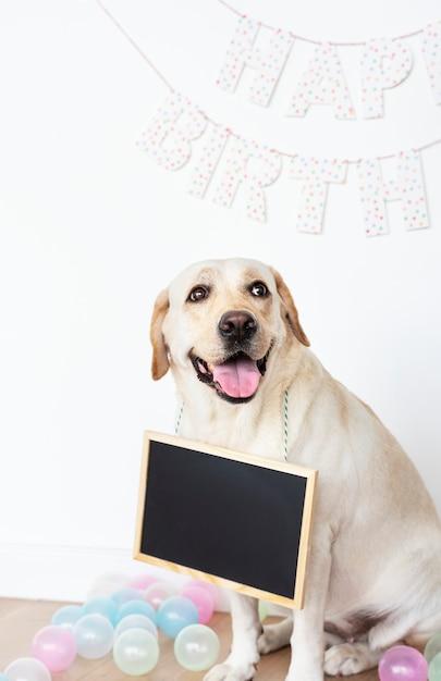 Labrador bij een verjaardagspartij met een lege raad die op zijn hals hangt Gratis Foto