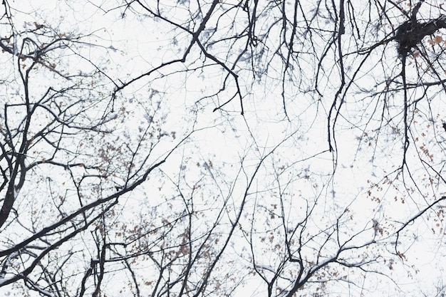 Lage boom van de het silhouet de naakte boom van de hoekmening in de winterdag Gratis Foto
