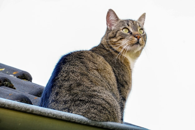 Lage hoek close-up shot van een mooie kat met groene ogen staande op een dak Gratis Foto