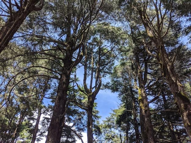 Lage hoek die van de hoge bomen in het bos onder de heldere hemel is ontsproten Gratis Foto