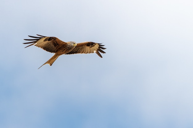 Lage hoek die van een adelaar is ontsproten die onder een duidelijke blauwe hemel vliegt Gratis Foto