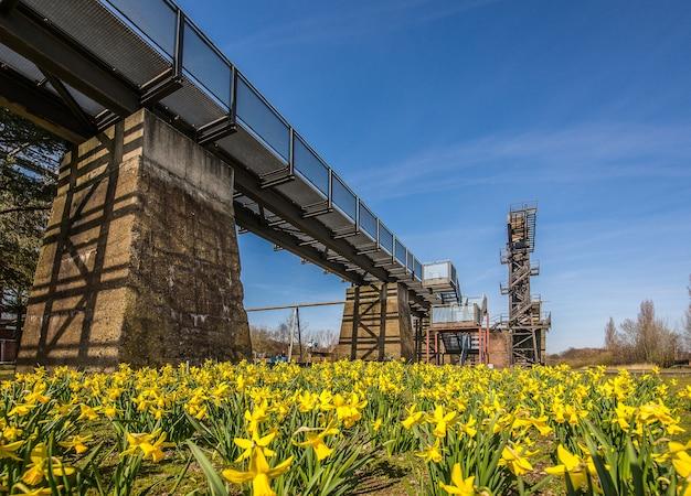 Lage hoek die van een brug over een deken van gele bloemen met een duidelijke blauwe hemel is ontsproten Gratis Foto
