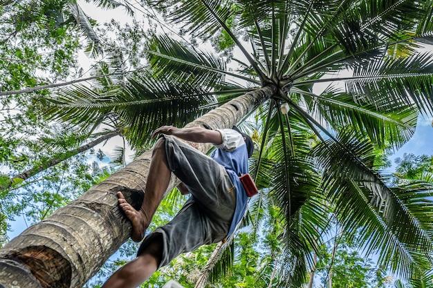 Lage hoek die van een mannetje is ontsproten dat een hoge palmboom beklimt Gratis Foto