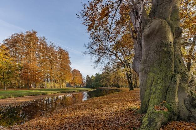 Lage hoek die van een park met een meer en bomen is ontsproten in het midden van een koele dag Gratis Foto