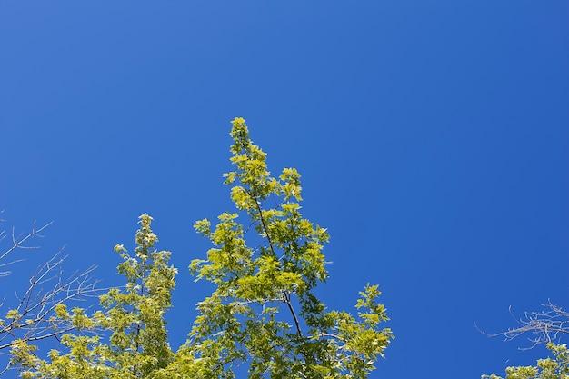 Lage hoek die van hoge groene bomen met een duidelijke blauwe hemel is ontsproten Gratis Foto