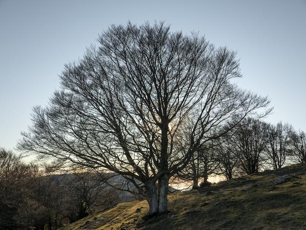 Lage hoek opname van een veld op een heuvel vol kale bomen onder de heldere hemel Gratis Foto