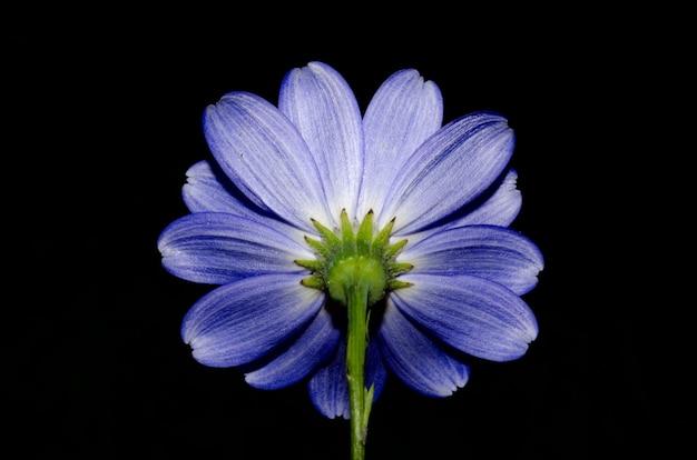 Lage hoek shot van een mooie paarse bloem geïsoleerd op zwart Gratis Foto
