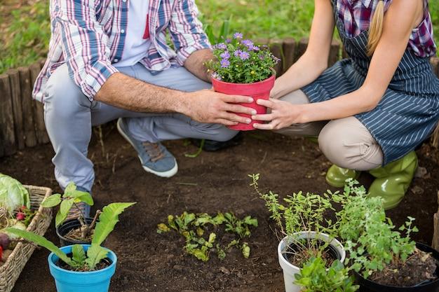 Lage sectie tuinlieden die ingemaakte installatie houden bij tuin Premium Foto
