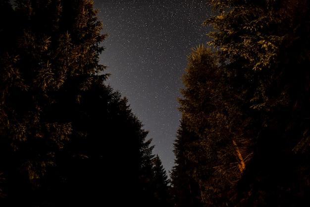 Lage weergave van prachtige bomen en de lucht Gratis Foto