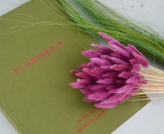 Lagurus plant geïsoleerd op achtergrond Premium Foto