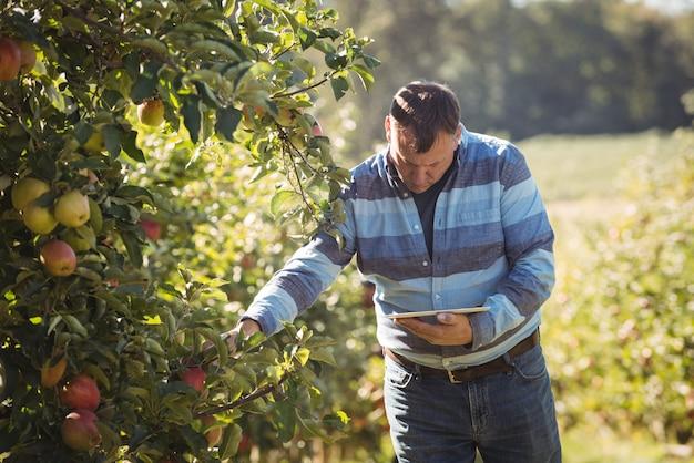Landbouwer die digitale tablet gebruiken terwijl het inspecteren van appelboom in appelboomgaard Gratis Foto