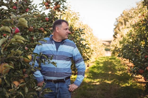 Landbouwer die zich in appelboomgaard bevindt Gratis Foto