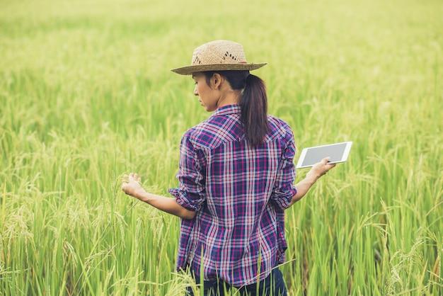 Landbouwer die zich in een padieveld met een tablet bevindt. Gratis Foto