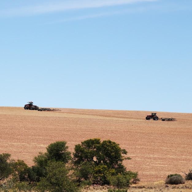 Landbouwgebied bedekt met het gras onder een blauwe hemel Gratis Foto