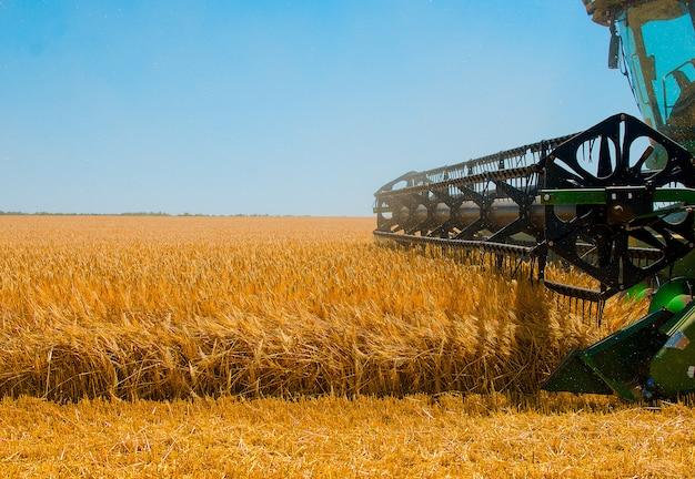 Landbouwmachines verzamelt geel tarwegewas op open gebied op een zonnige heldere dag Premium Foto