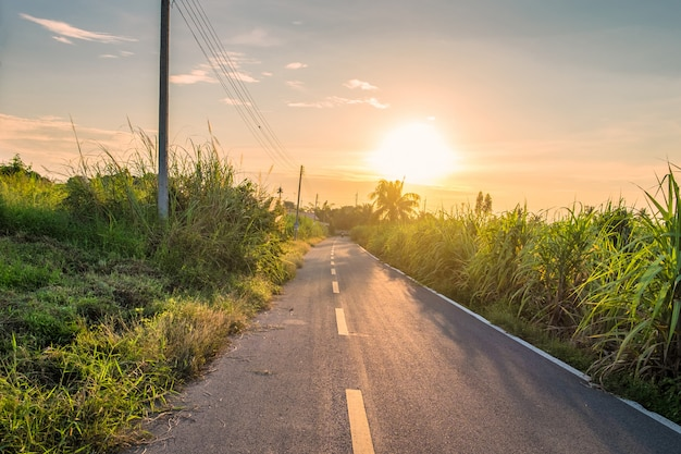 Landelijke weg en suikerriet bij zonsondergang Premium Foto