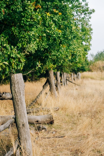 Landelijke zomer landschap met gebroken dorp hek Premium Foto