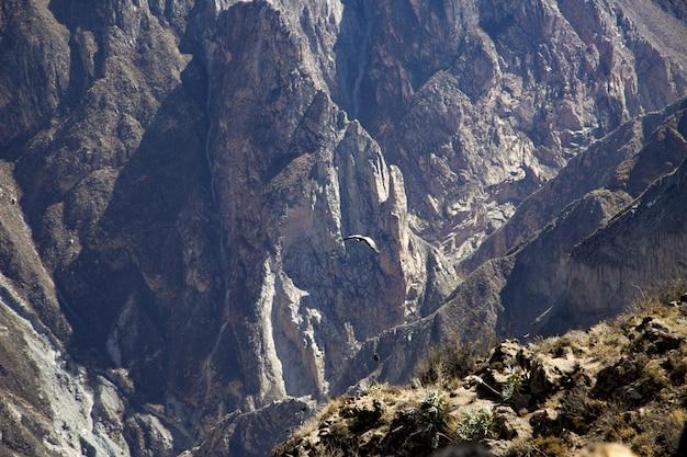 Landschap dat van mooie rotsachtige bergen is ontsproten met een adelaar die in de loop van de dag vliegt Gratis Foto