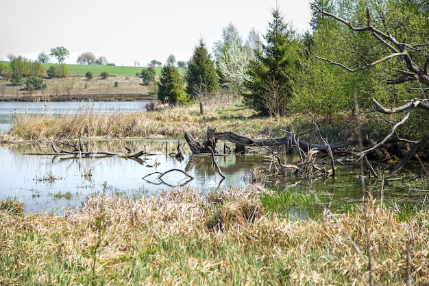 Landschap. lake en moeras op de prachtige bomen. Gratis Foto