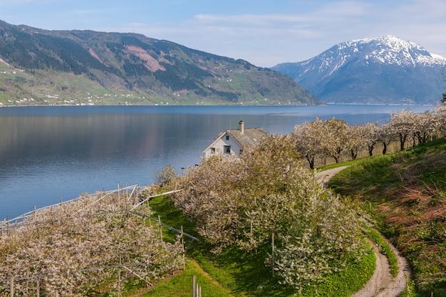 Landschap met bergen. dorp in noorse fjorden Gratis Foto