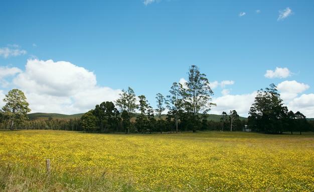 Landschap op een mooie dag Gratis Foto