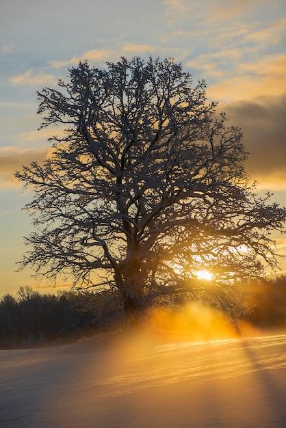 Landschap van besneeuwde winterochtend in krimulda, letland Premium Foto
