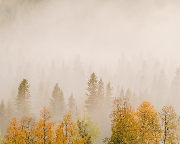Landschap van bomen met kleurrijke bladeren in een bos bedekt met mist Gratis Foto