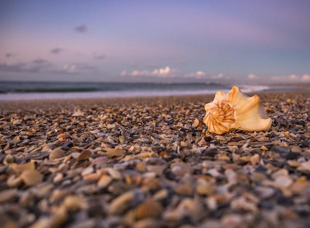 Landschap van een adembenemende zonsondergang op het strand in oost-florida Gratis Foto