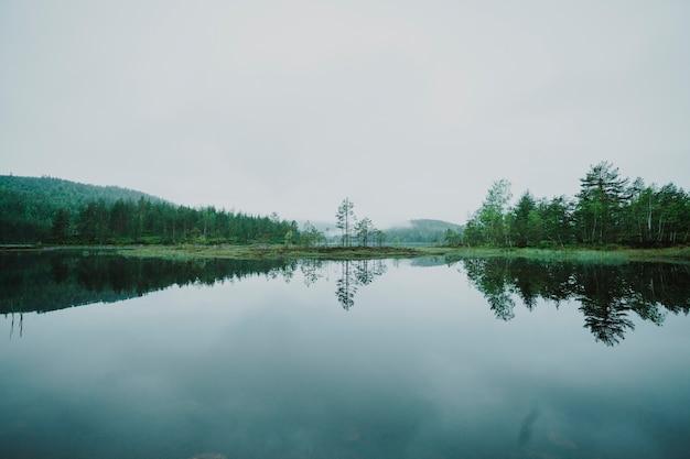 Landschap van een meer dat door bomen wordt omringd Premium Foto
