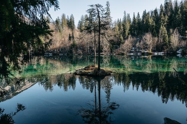 Landschap van een meer omgeven door bossen met bomen die reflecteren op het water onder het zonlicht Gratis Foto