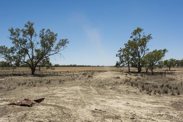 Landschap van een veld vol verschillende soorten gedroogd groen onder de heldere hemel Gratis Foto