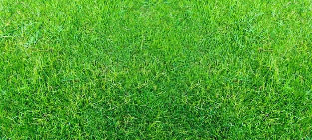 Landschap van grasgebied in groen openbaar parkgebruik als natuurlijke achtergrond of achtergrond. groene grastextuur van een gebied. Premium Foto