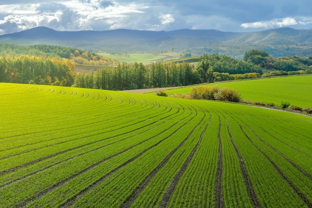 Landschap van platteland heuvels met rijst veld boerderij, bos en berg in de herfst Premium Foto