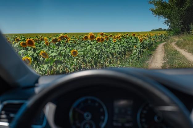 Landschap van zonnebloemen veld in de buurt van dorpsweg door autoraam. Premium Foto