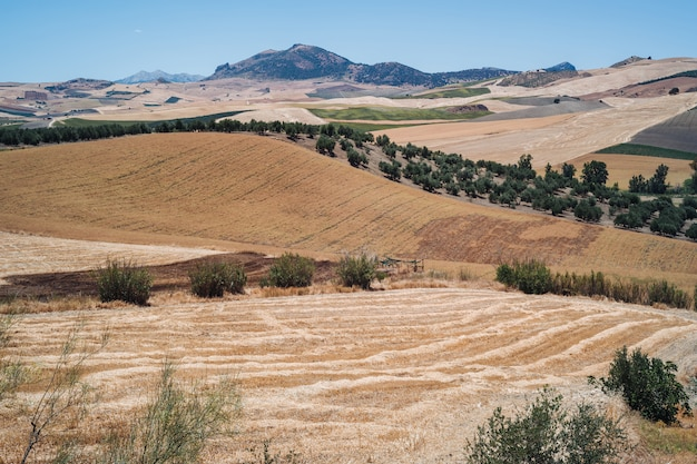 Landschappen van andalusië, spanje Premium Foto