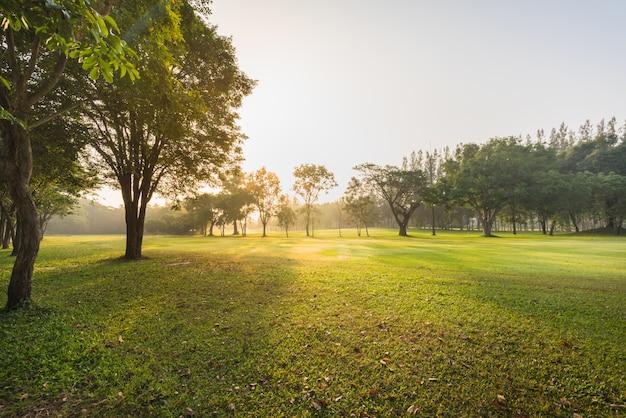 Landschaps groen gras bij het natuurreservaat in ochtend, mooie zonneschijn met fairwaygolf Premium Foto
