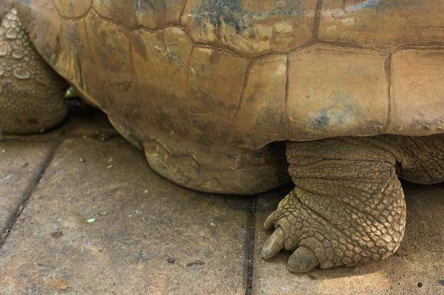 Landschildpadden Premium Foto